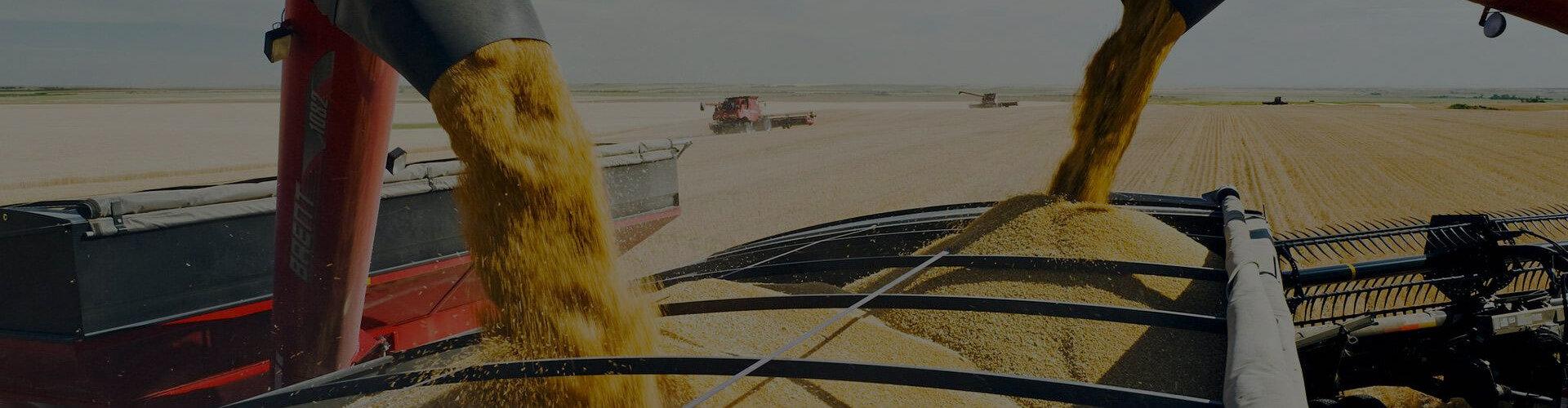 Перевалка и доставка зерновых на экспорт